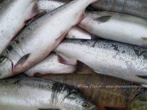 Мъж източи цял язовир и си прибра... 670 кила риба