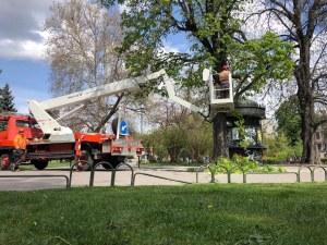 Премахват 2 от дърветата в градинката пред Народния театър