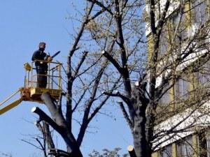Започва акция за премахване на опасни клони на булевард