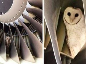 Работници откриха сова в двигател на самолет