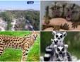 Фалстарт със закупуването на екзотични  животни за пловдивския зоопарк – били скъпи