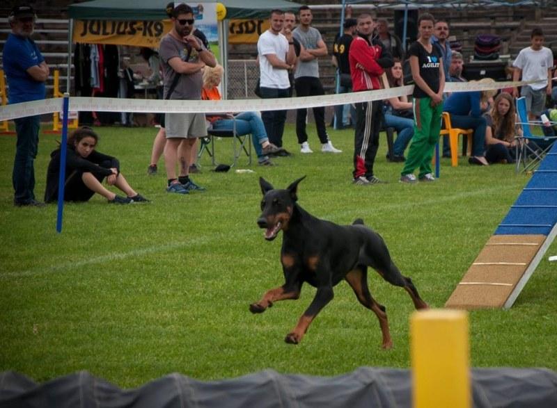 600 кучета от 12 държави идват на изложба край Пловдив