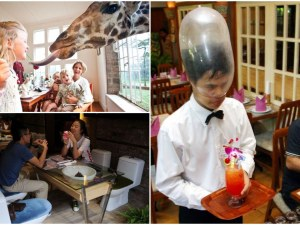 Най-странните ресторанти в света: Да се храниш върху тоалетна чиния или заедно с жираф