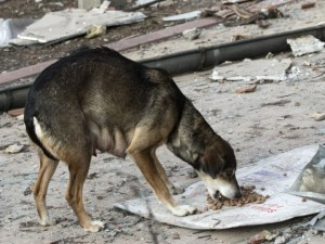 Перничани притеснени: Някой трови кучета в квартал