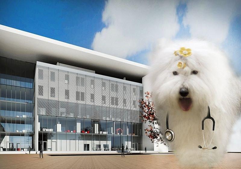 Бобтейлът Мон и още 600 кучета събират средства за нов педиатричен комплекс в УМБАЛ