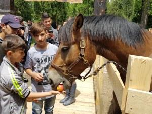 Породисти коне подпомагат лечението на хора с различни увреждания
