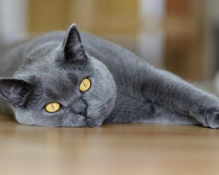 Котката - идеалният бодигард! Ако ви мине път - на добро е
