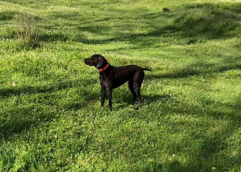 Търси се: Изгубено куче в Пловдив!