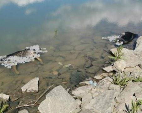 Жестокост! Убити кучета в язовир