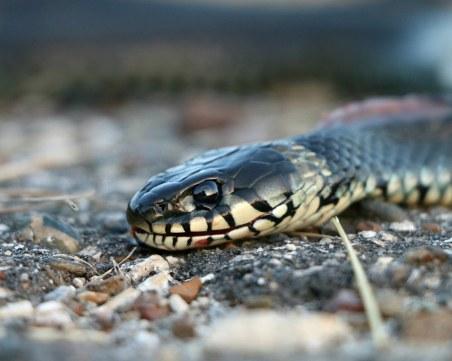 Змия ухапа млада майка, докато разхожда 3-месечното си бебе в парк