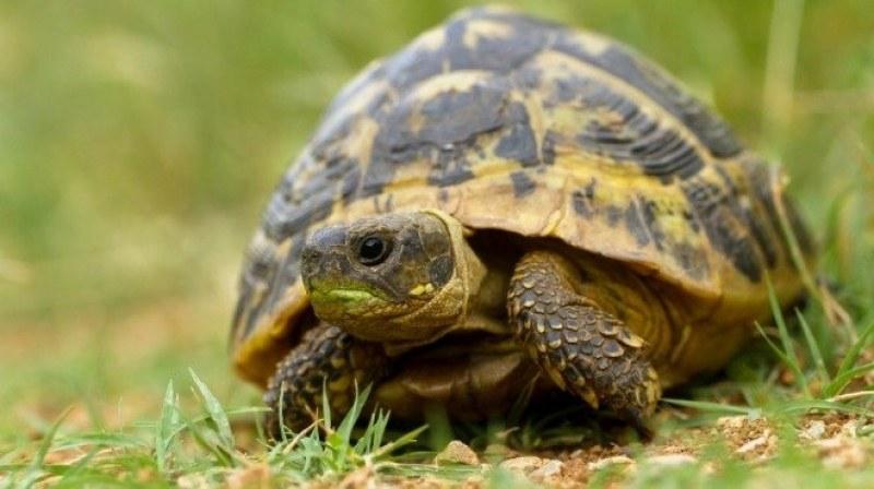 Мъж продавал застрашени костенурки, задържаха го в Харманли