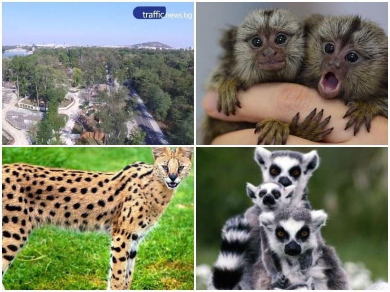 Нов опит да се вземат екзотични  животни за пловдивския зоопарк, приготвят повече пари