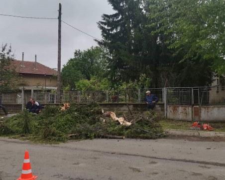 Ураганен вятър и градушка връхлетяха свищовското село Морава
