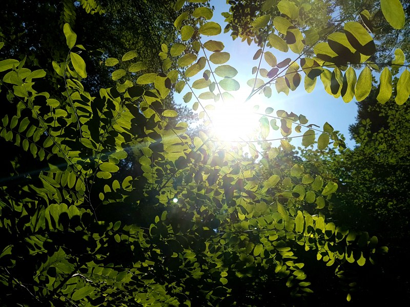 Съботата и неделята – слънчеви! Идната седмица ни очаква прекрасна пролет