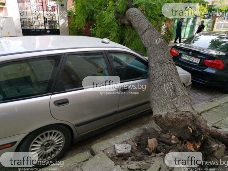 Дърво падна върху автомобил в центъра на Пловдив
