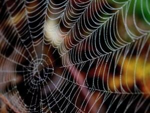Паяците – основен индикатор за наличието на негативна енергия в дома