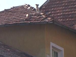 Буря в Божурище: Вятър събори тухли и уби 47-годишен мъж