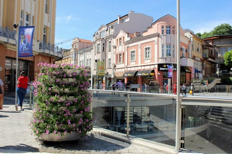 Над 3 милиона нови цветя водят лятото в Пловдив