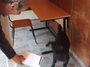 Коза се опита да гласува в Койнаре