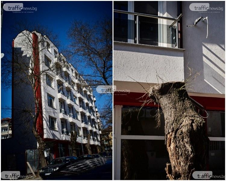 Алиса ли живее тук? Чудат блок се извиси в центъра на Пловдив