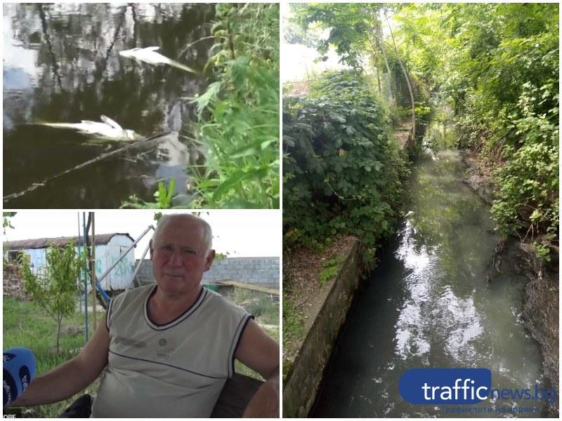 Отровна вода потече в реката до Ново село, погуби риби, жаби и водорасли