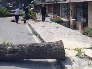 Над 20 дървета бяха отсечени в Банско. Защо?