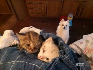 Браво! Двама младежи спасиха котенца, носени от потопа в Пловдив