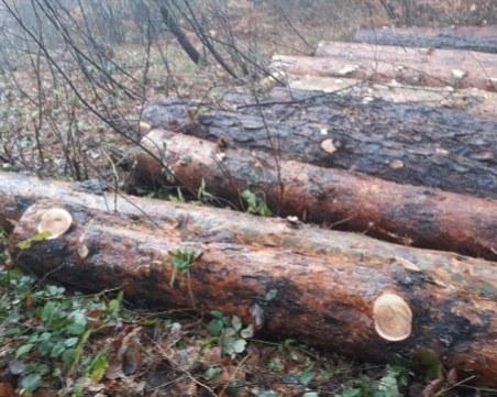 Трудова злополука в кюстендилско село. Дървосекач смазан от бор
