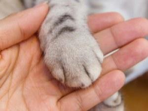 Бездомна котка със смазани лапи проходи с титаниеви протези
