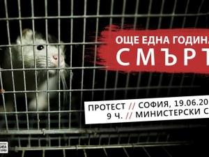 Още една година смърт! Протест срещу фермите за ценни кожи у нас