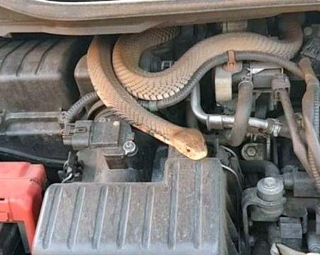 Змия се шмугна в патрулка пред очите на полицаите