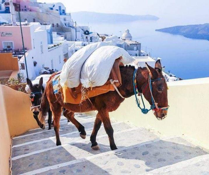 Прекратете малтретирането на магаретата в Санторини!