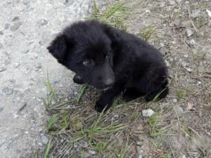 Кучета талисмани посрещат посетителите в Чернобил