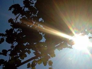 Слънчева сряда и до 34 градуса. Възможни са следобедни валежи