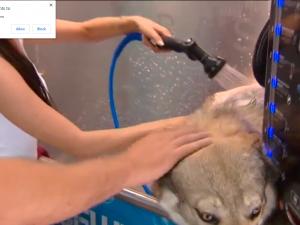 Софиянци могат да къпят кучетата си за левче
