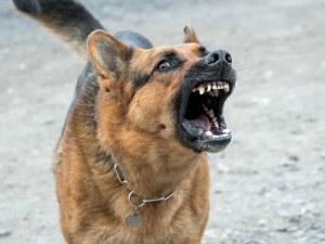 Нападнати, надрани, нахапани... Затова: Кучета над 5 кг – само на каишка!