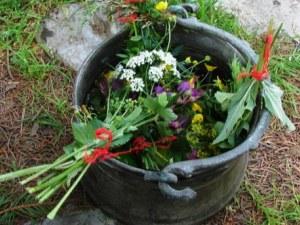 Еньовден: 77 росни билки наберете, венец сплетете! Бъдете здрави!