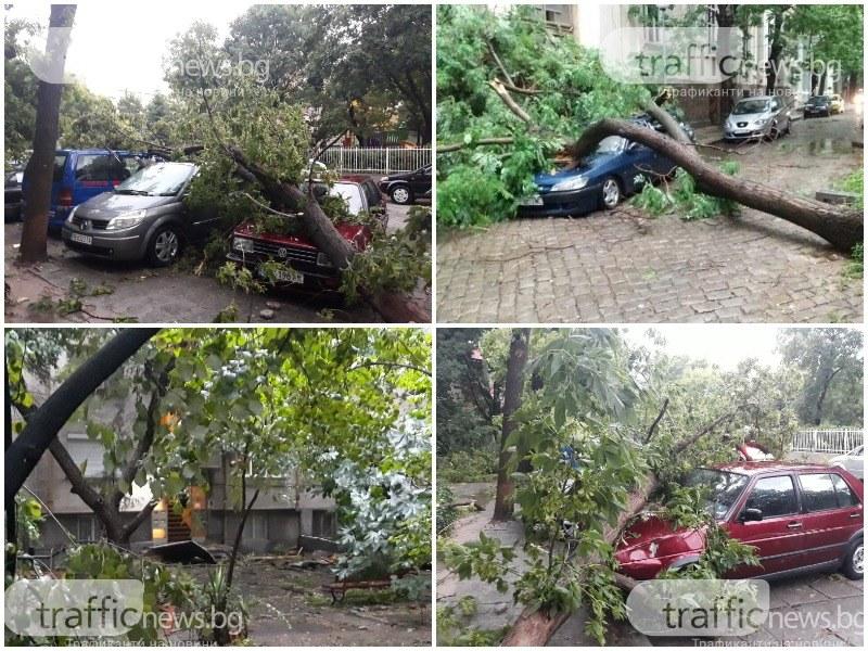 Паднали дървета в центъра на Пловдив смазаха десетки коли!