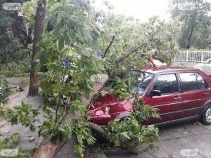 """Дърво се прекърши на метри от пловдивско училище, цялата ул. """"Иван Вазов"""" е в клони"""
