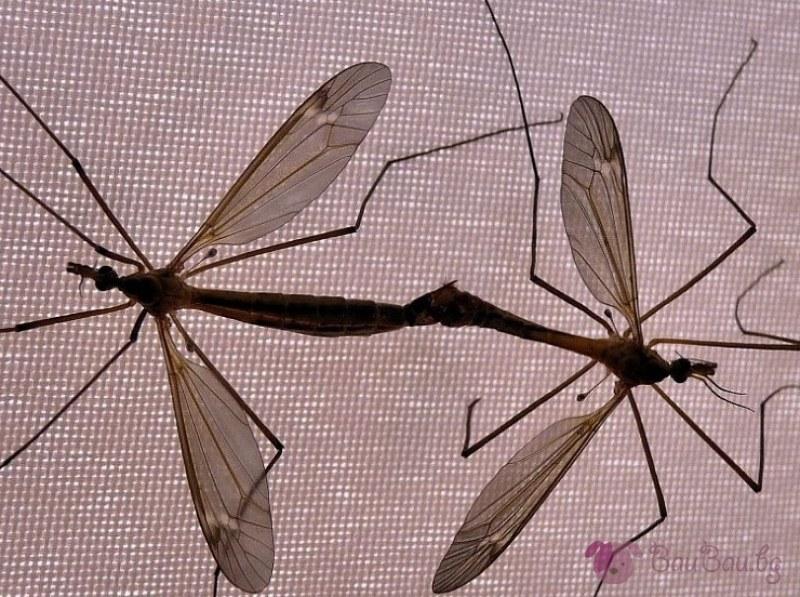 Комарите хапят яко в Силистра, градът се дигна на бунт