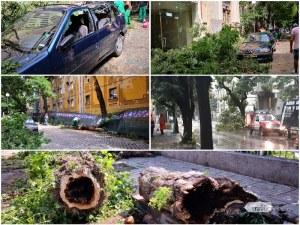 След бурята в Пловдив: Продължават да валят сигнали в пожарната, редица коли пострадаха от дървета