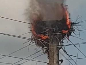 Малки щъркелчета изгоряха живи, огнеборци отказват да гасят гнездото!