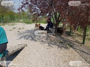 Разширяват кучешкия приют с 5 дка в Пловдив – ще останат ли бездомни кучета по улиците?