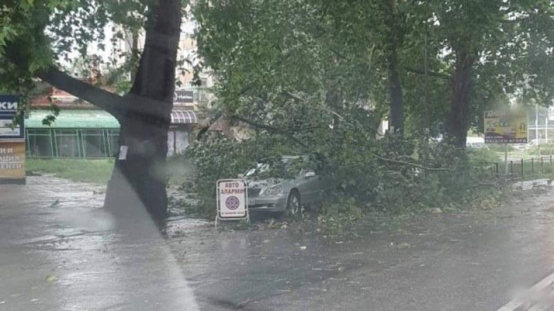 Силна буря удари Кърджали! Дървета паднаха върху две коли