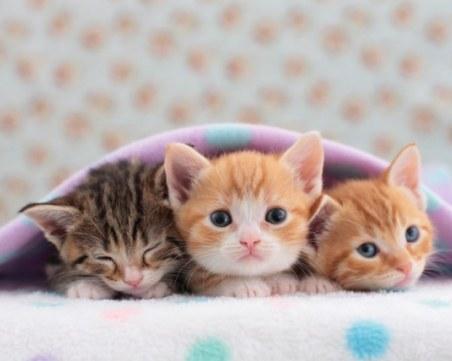 Добро дело: Семейство спаси малки котета, завързани в чувал