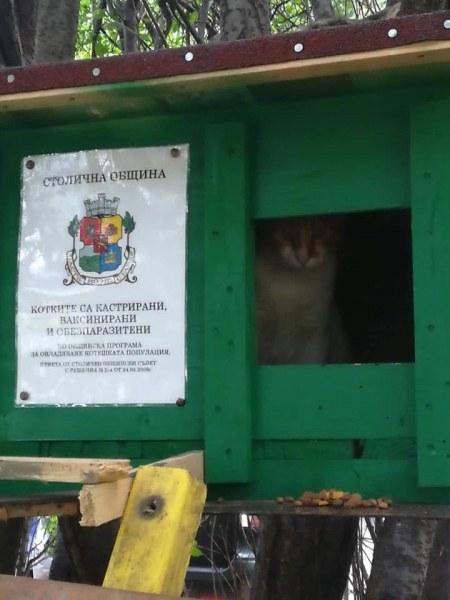 Поставят къщички за бездомни кучета и котки, съседите да не се сърдят - законно е