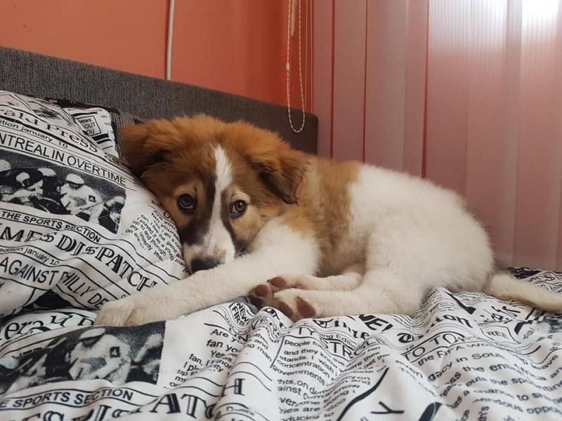 Спасено от зла участ бебе куче търси своя нов дом