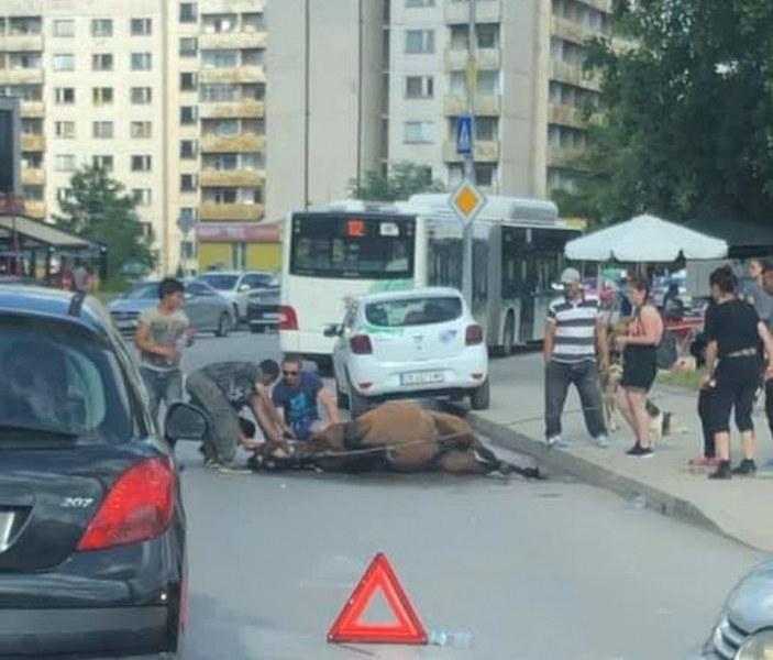 Автобус блъсна избягал кон в Студентски град, евтанизираха го