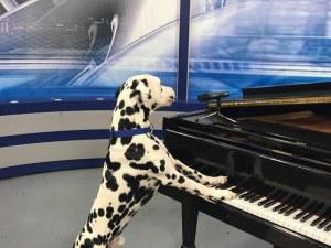 """""""Пеещ"""" далматинец от Банкя, кръстен на Фреди Меркюри, влиза в предаване за таланти"""