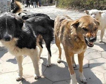 Бездомни кучета нападнаха майка с дете в Дупница